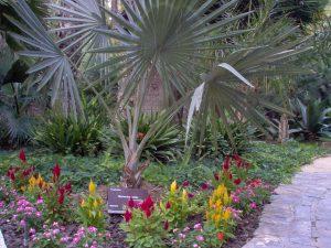 Jardín Huerto del Cura photo